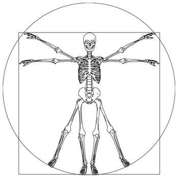davinci skeleton
