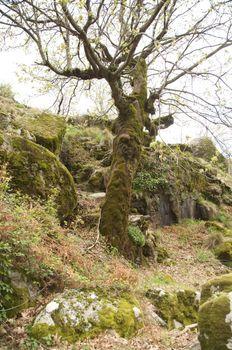 moss trunk