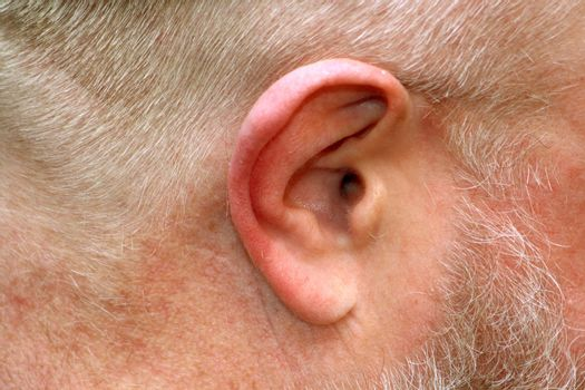 Close up of anatomy of human ear.