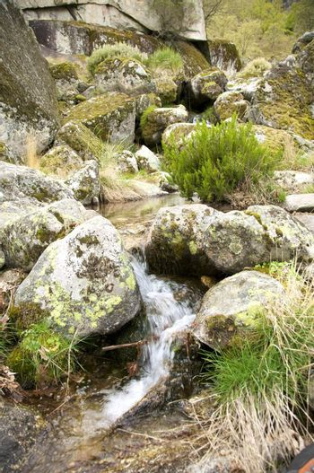 water rocks and moss
