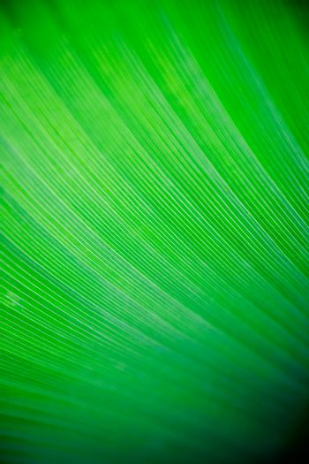 A very large tropical leaf texture background