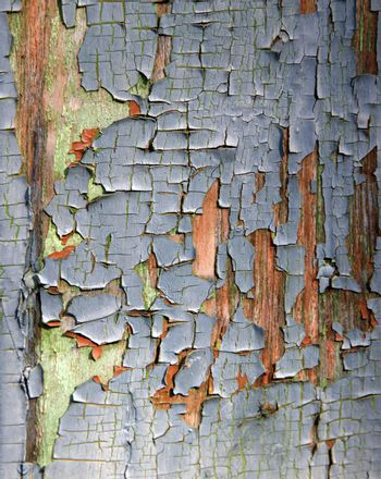 Full screen high resolution shot of wood. Good for a texture or a background.