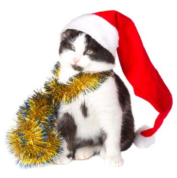 kitten as Santa Claus, isolated on white