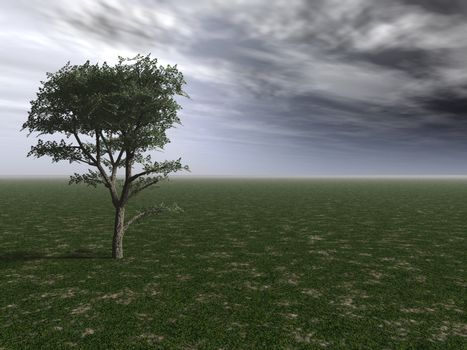 lonely tree and a cloudy sky - 3d illustration