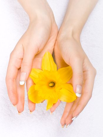 Daffodils in the hands