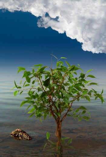Tree in water, near to a stone, under the dark blue sky with clouds