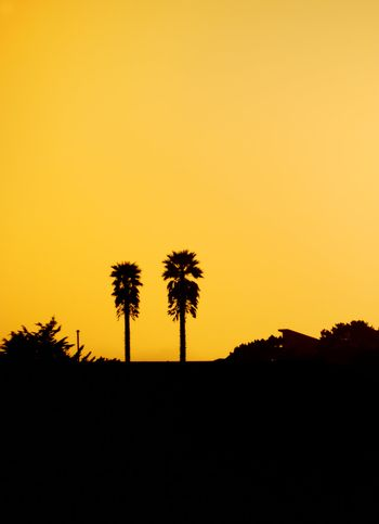 Two Palm Tree Silhouettes at Sunset
