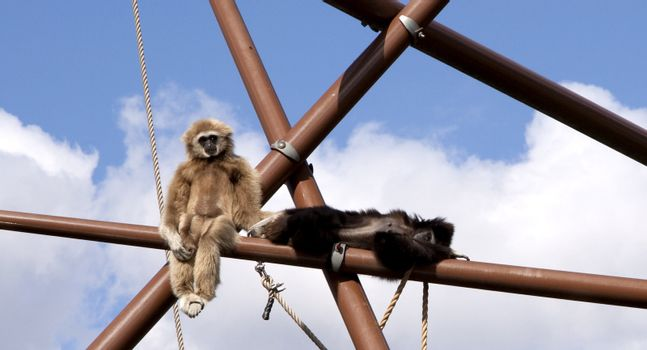Two funny monkies