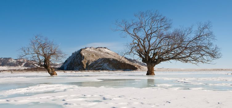 Trees in an ice