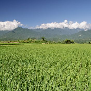 Agriculture scenic
