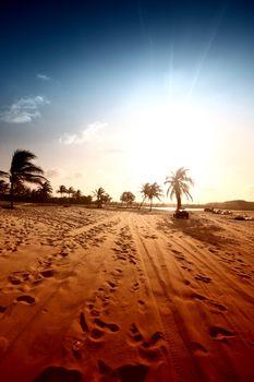 palm in yellow sunrise sky