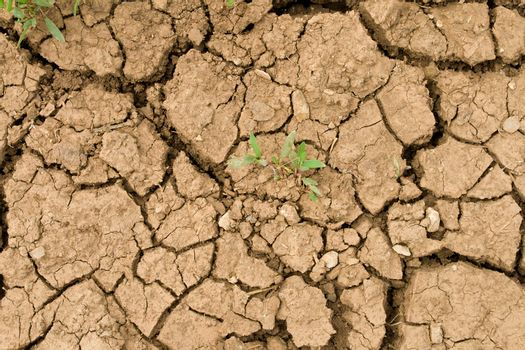 cracked ground and green sprout