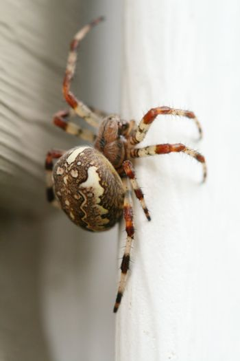 The spider in the web waits for extraction macro