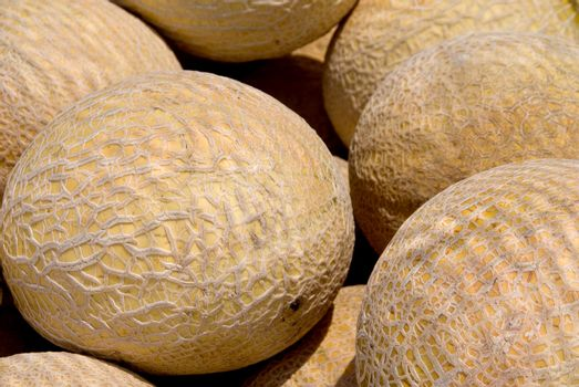A fresh and delicious Cantaloupe melon ready for eating.
