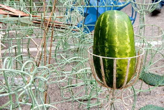 A fresh and delicious watermelon ready to be eaten.