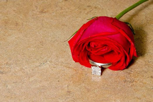 A wedding ring in a rose for Valentines Day.