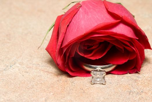 A diamond wedding ring in a rose for Valentines Day