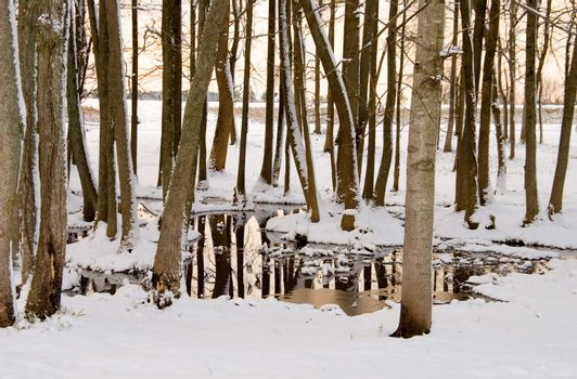 A small swamp area in the snow.
