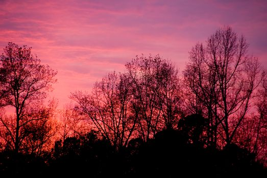 A blazingly colorful sunset over a forest in the winter.