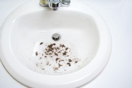 Beard trimmings left in a bathroom sink.