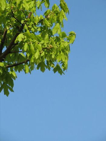 Sky with green leafs, usable as background
