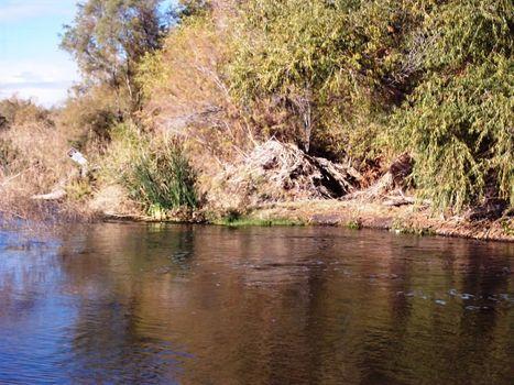 2204 - Banks Of The Gila River AZ