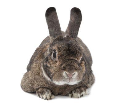 Rabbit bunny isolated on white