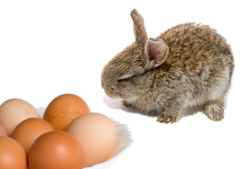 bunny and easter eggs, isolated on white