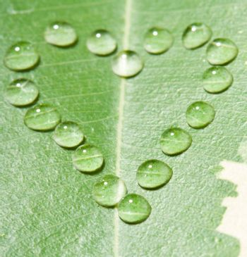 heart from water drops on leaf, macro shot