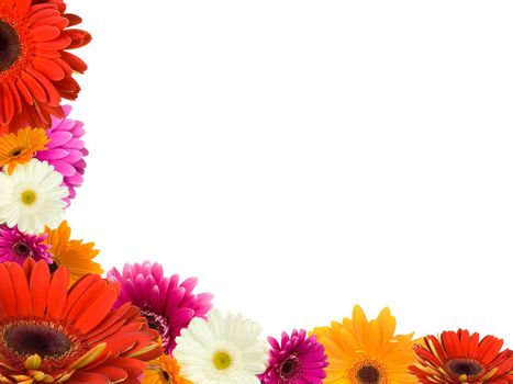 many gerberas and blank place for your text, isolated on white