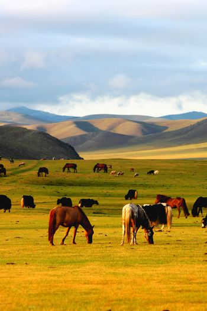 Horse on grasslands