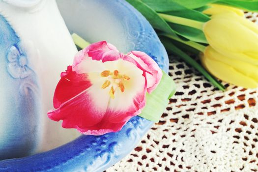 Tulip and Pitcher