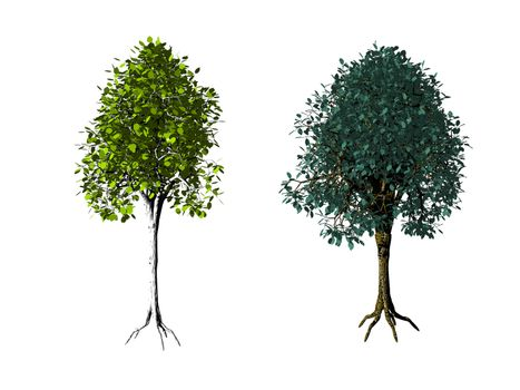 two iolated trees on white background - 3d illustration