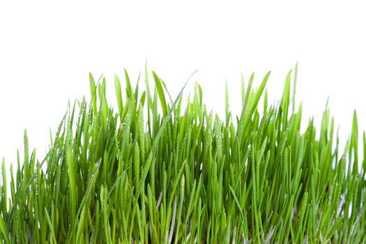 fresh wet grass