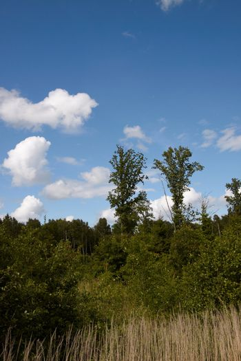 High resolution summer landscape with forest and blue sky with clouds