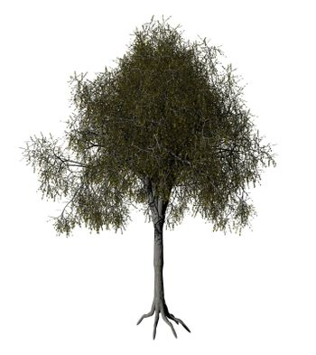 iolated tree on white background - 3d illustration