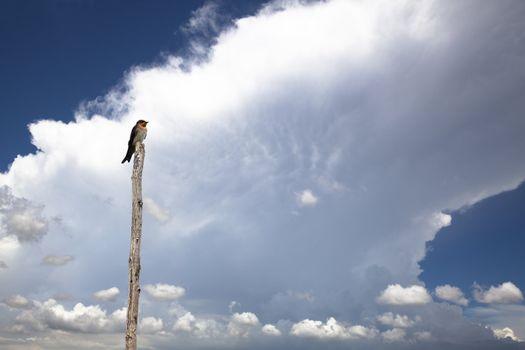 Bird with summer storm cloud