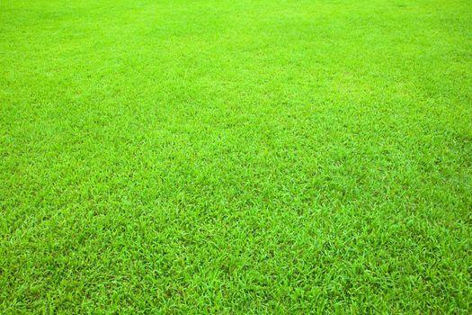 The Green grass texture