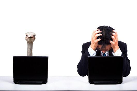 Depression businessman work with Ostrich partner