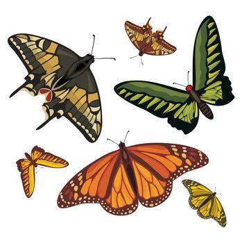 different realistic butterflies