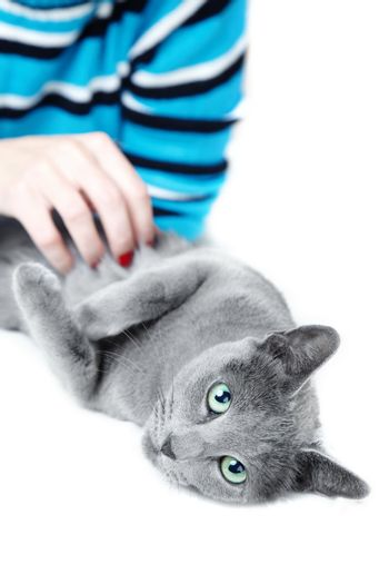 Human hand pampering cat laying on a white background