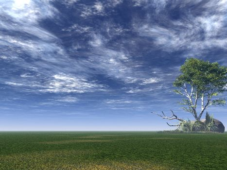 lonely birch on a green field - 3d illustration