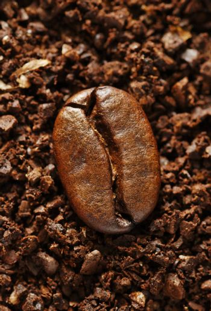 ground coffee bean