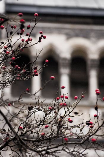 rosehips in front of a church