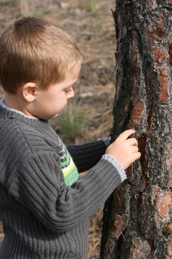 Little blond boy chipping bark of a tree in the woods