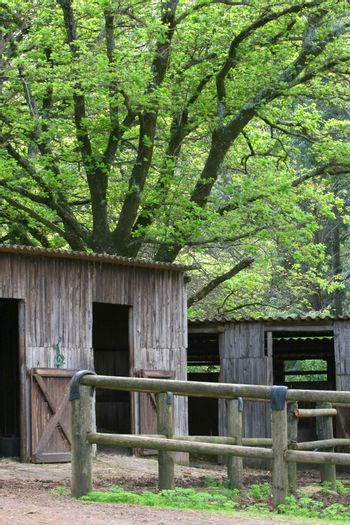 Wooden stables under a large green tree