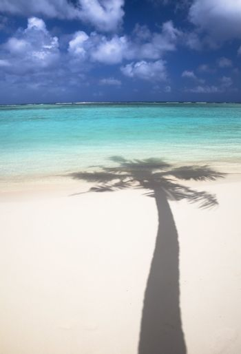 Tropical beach and shadow of coconut tree