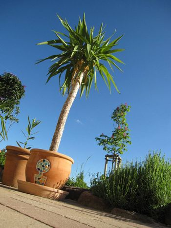 Summer Holidays with palm in the south