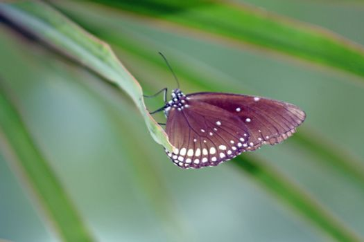 a brown and cream butterfly on a green leaf