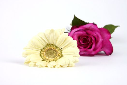 White flower and rose